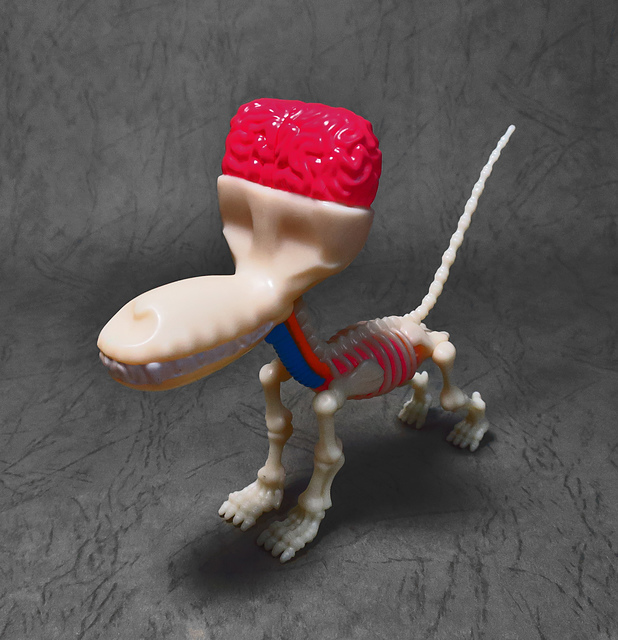 06.jpg - 4D MASTER BALLOON DOG ANATOMY