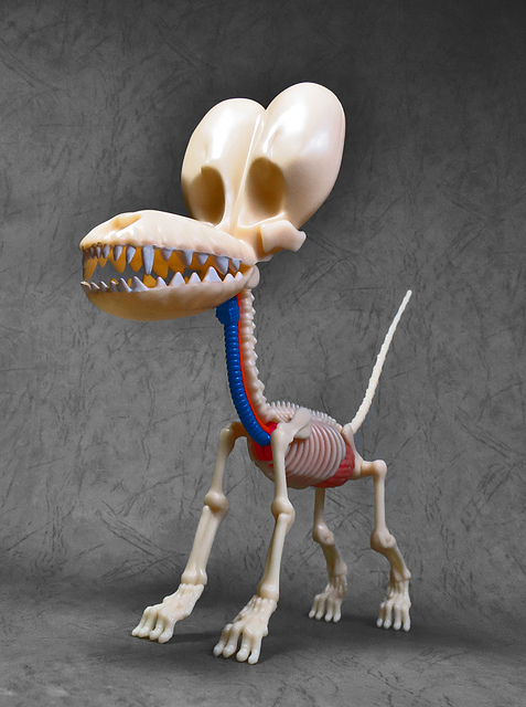 25.jpg - 4D MASTER BALLOON DOG ANATOMY