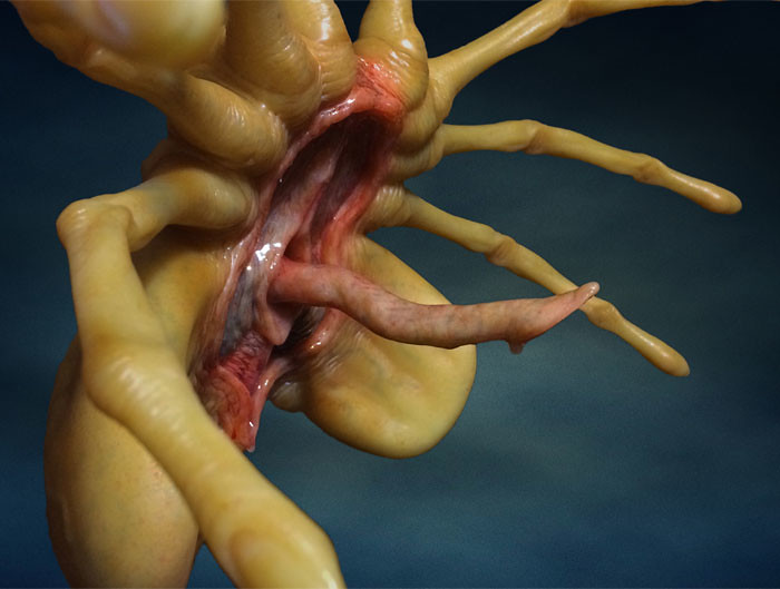 Hollywood Collectibles Group【抱臉體】Aliens Facehugger Replica 1:1 比例電影道具複製品